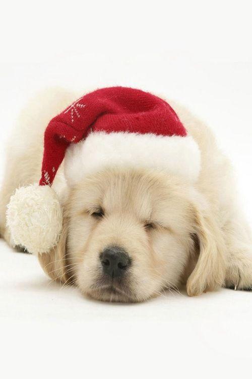 Goawaycomeback Christmas Puppy Cute Puppies Dog Holiday