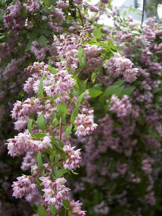 The Most Beautiful Spring-Flowering Shrubs | Pinterest | Shrub ...