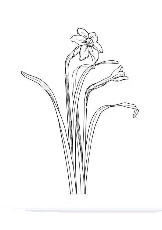 Malvorlage Narzissen | Pilz | Pinterest | Narzissen, Pilze und Blumen