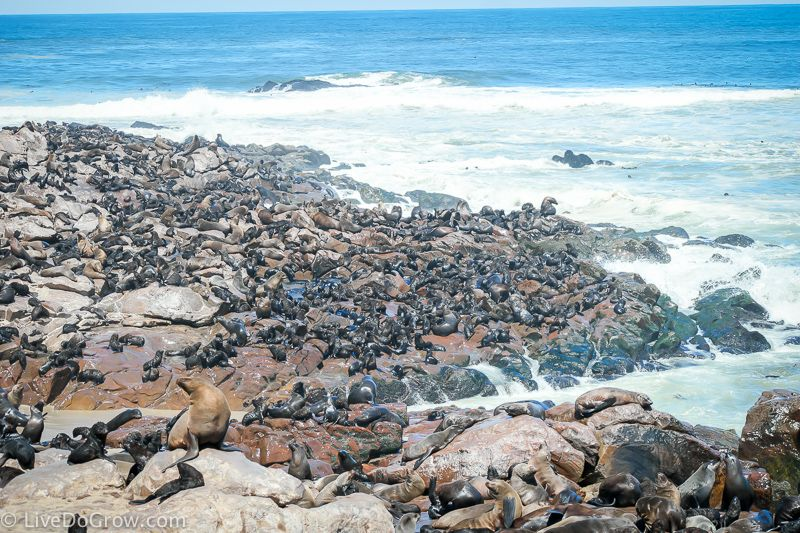 Visit the Seal Colony Cape Cross Namibia