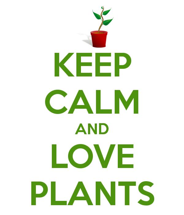 LOVE PLANTS