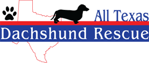 All Texas Dachshund Rescue Adtr Dachshund Rescue Dachshund Dachshund Adoption