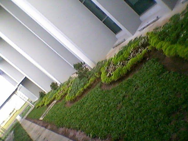 Landscaping And Modern Lifestyle: Tanaman peredam tampias hujan