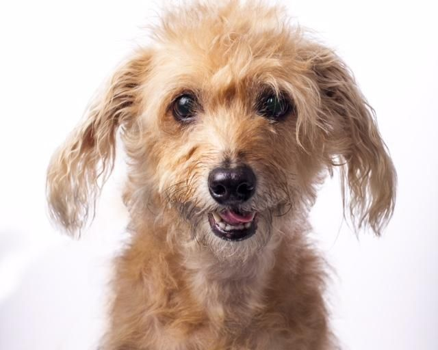Adopt Eldi On Cairn Terrier Mix Terrier Mix Dogs
