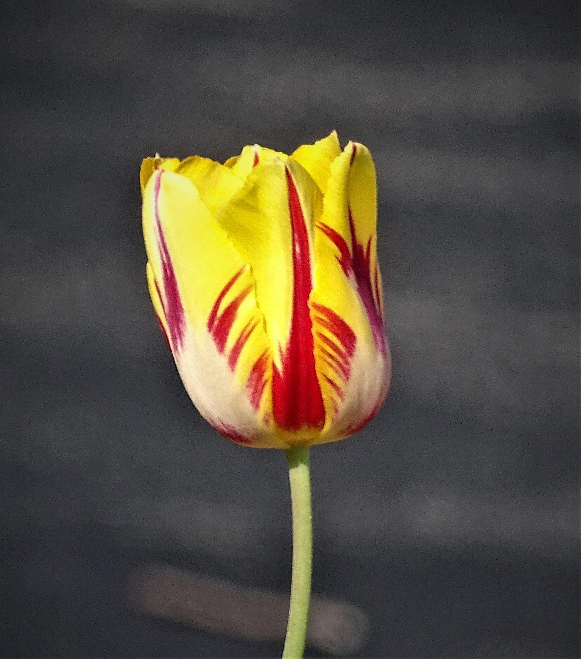 Yellow Flower Instant Download Digital Download Photography Etsy Yellow Flowers Digital Download Photography Flowers Photography