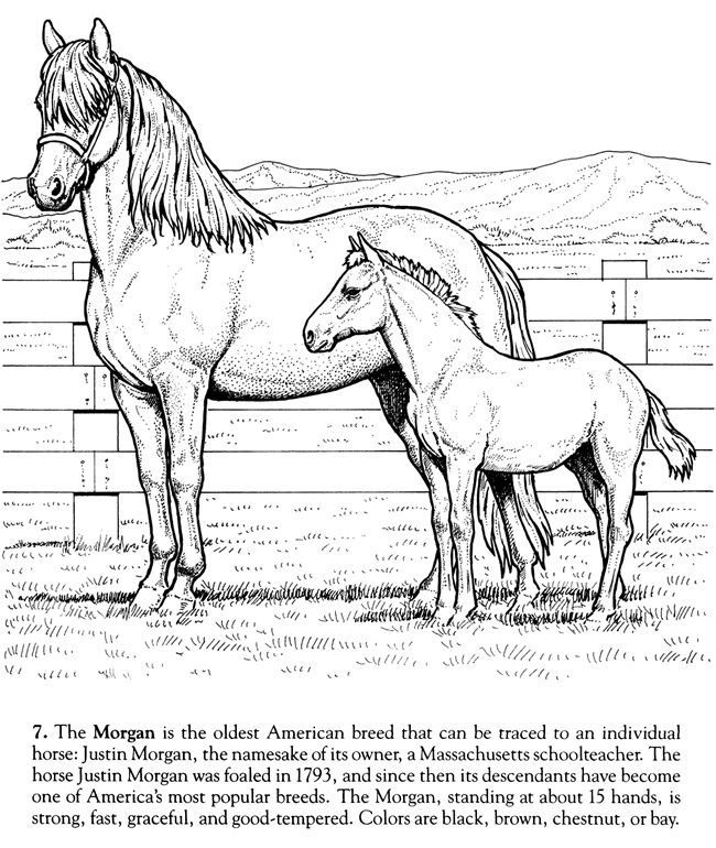 Coloring Page Printable Horse Welcome To Dover Publications