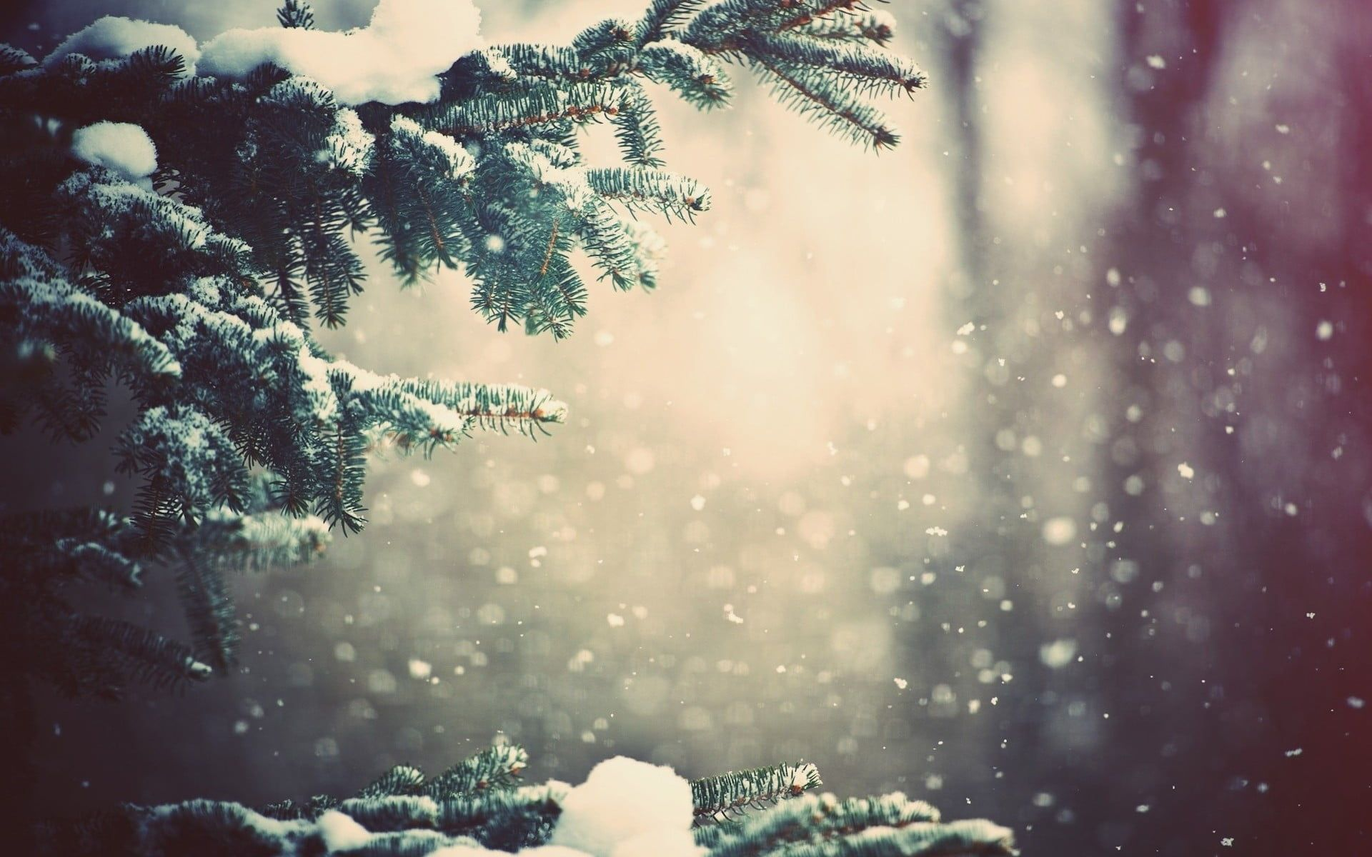 Green Tree Frozened Trees Close Up Photography Winter Snow Trees Depth Of Field Bokeh Plants Branch 1080p Wal Winter Wonder Winter Scenes Winter Magic