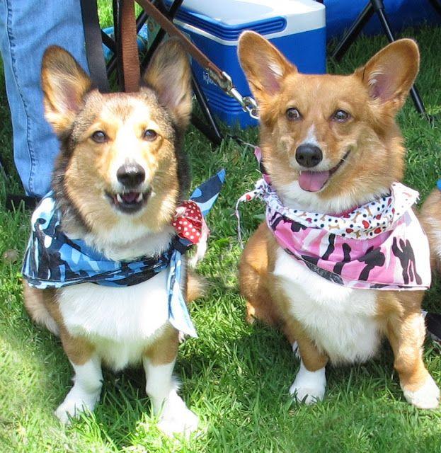 Max And Rosie Corgi Corgi Pictures I Love Dogs