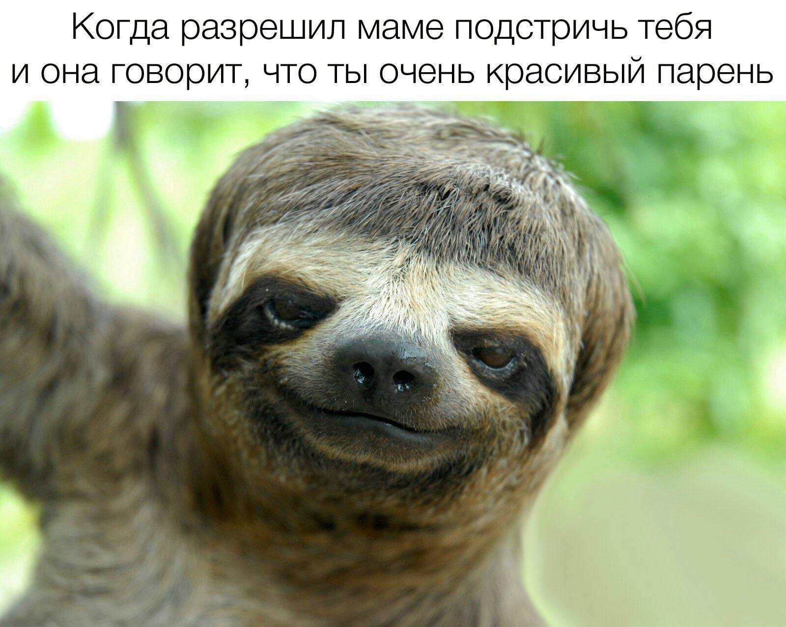 Картинки ленивцев прикол, поздравления днем рождения