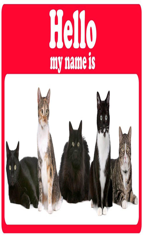 Best Cat Names Cat Guides Boy cat names, Cute cat