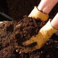 Big Blog of Gardening: Organic gardening and organic lawn