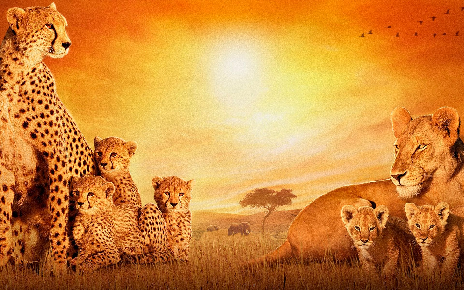 Click here to download in HD Format >>       African Cats    http://www.superwallpapers.in/wallpaper/african-cats.html