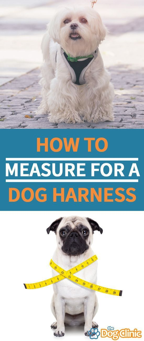 Measure Dog For A Harness If You Want To Make Sure It S