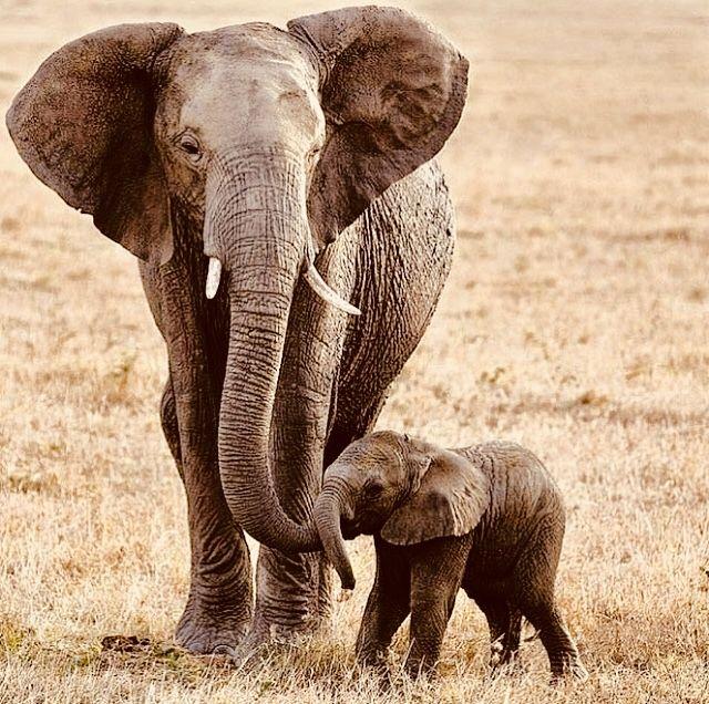 Pin Von Lotta Bergvik Auf Animals Elefanten