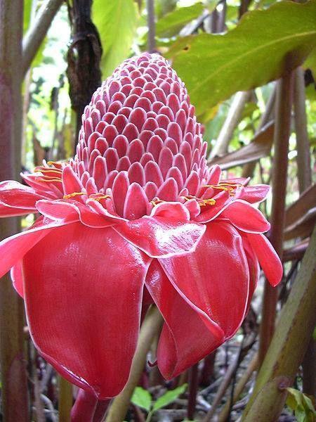 Fiori Tropicali.Meravigliosi Fiori Tropicali Fiori Esotici Bellissimi Fiori