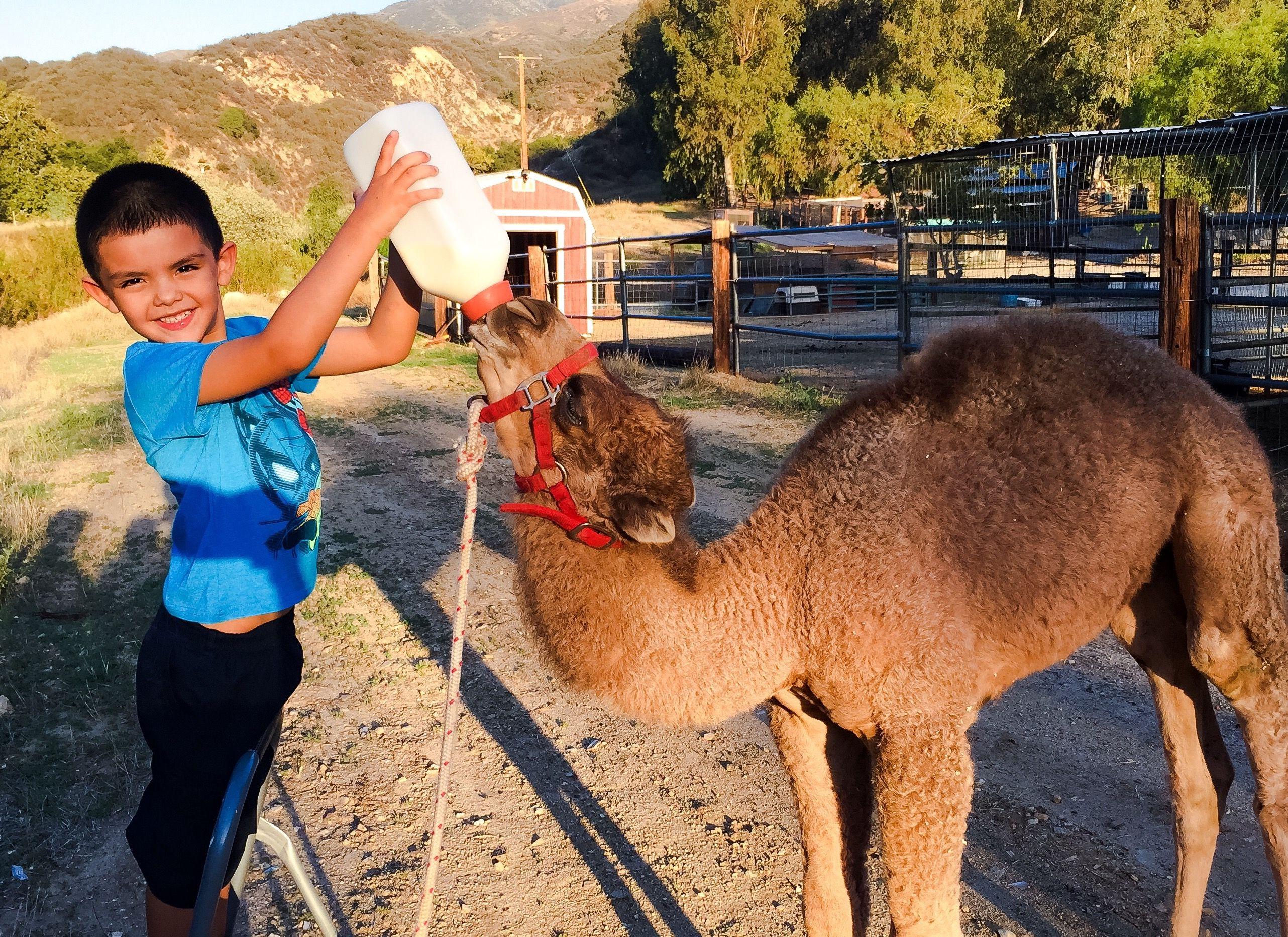 Animal Parties Petting Zoos for Birthdays Events Birthdays