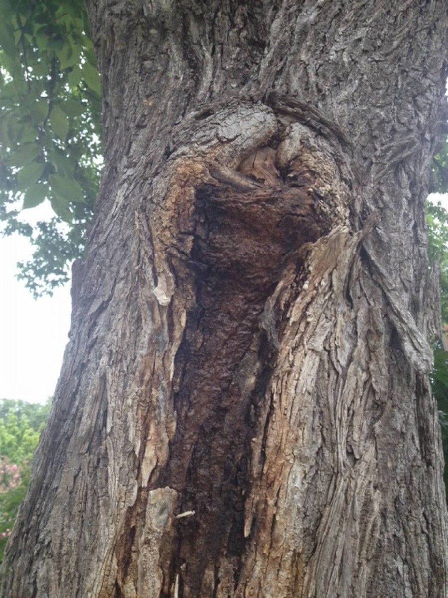 limb walkers tree service on preservation tree services black ooze what s wrong with my tree trees arborist dallas fortworth tree tree service tree roots preservation tree services black ooze