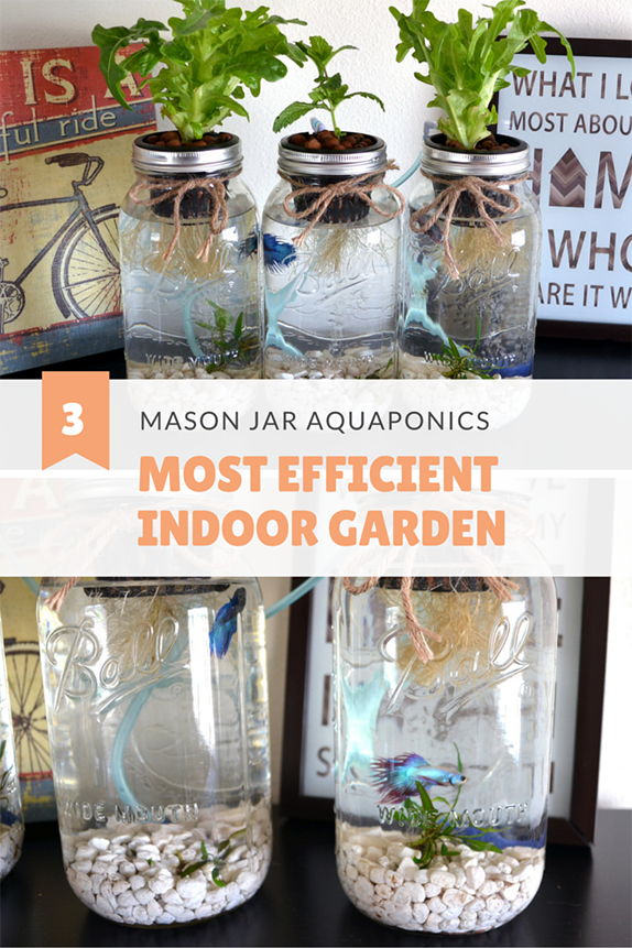 3 mason jar aquaponics kit build your own hydroponics herb garden i grow herbs and salad with my mason jar aquaponics system my betta fish are happy and active in their systems indoor herb garden workwithnaturefo