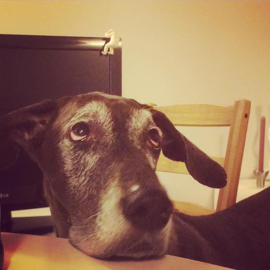 #greatdane #dog by samrasekh