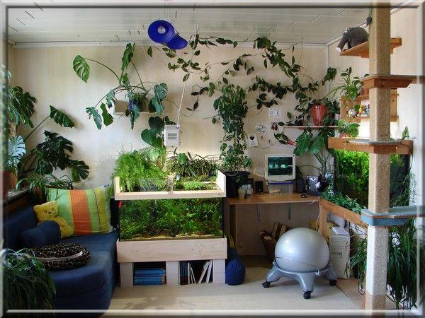zimmerpflanzen aquarium