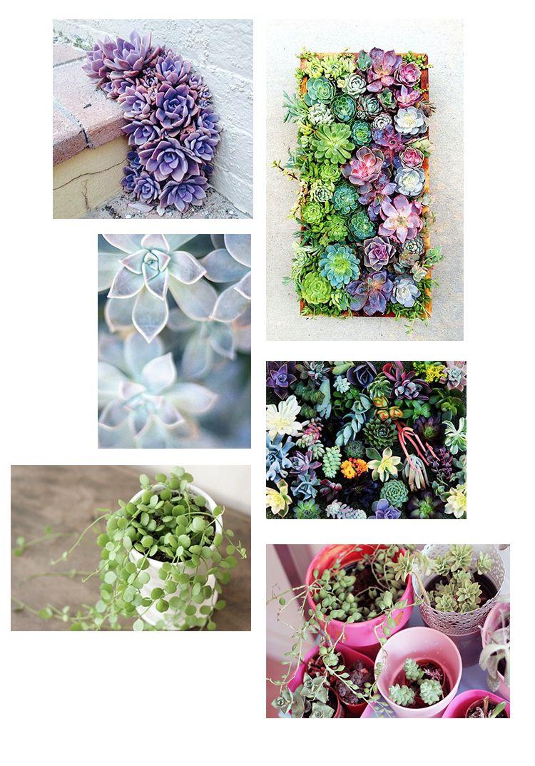http://www.mamzelleemie.com/diy-bouturer-des-succulentes/