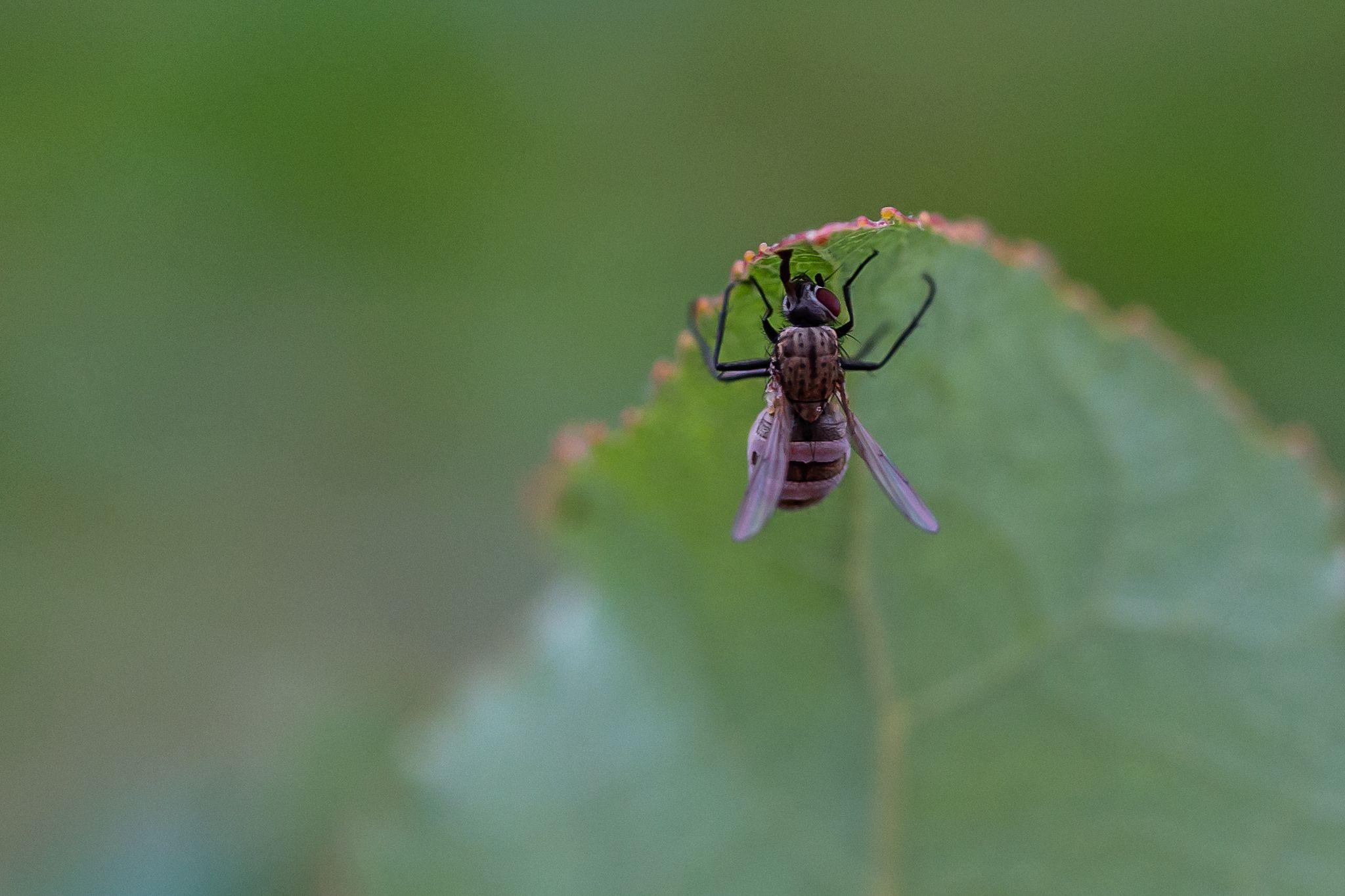 Unbekannte Fliege Mit Bildern Fliege