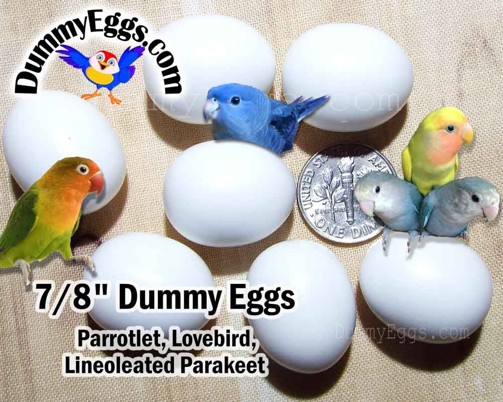7 dummy eggs for parrotlet eggs lovebird eggs lineoleated 7 dummy eggs for parrotlet eggs lovebird eggs lineoleated parakeet eggs solid plastic non forumfinder Image collections