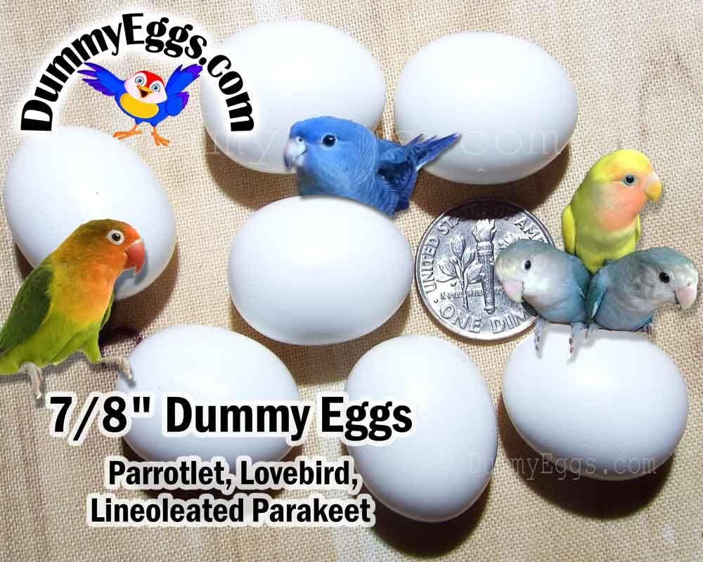 7 dummy eggs for parrotlet eggs lovebird eggs lineoleated 7 dummy eggs for parrotlet eggs lovebird eggs lineoleated parakeet eggs solid plastic non forumfinder Choice Image