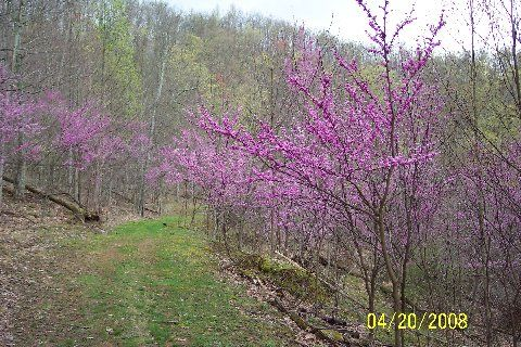 Flowering Trees Of West Virginia We Were There In The Sring When These Were Blooming Flowering Trees The Great Outdoors Plants