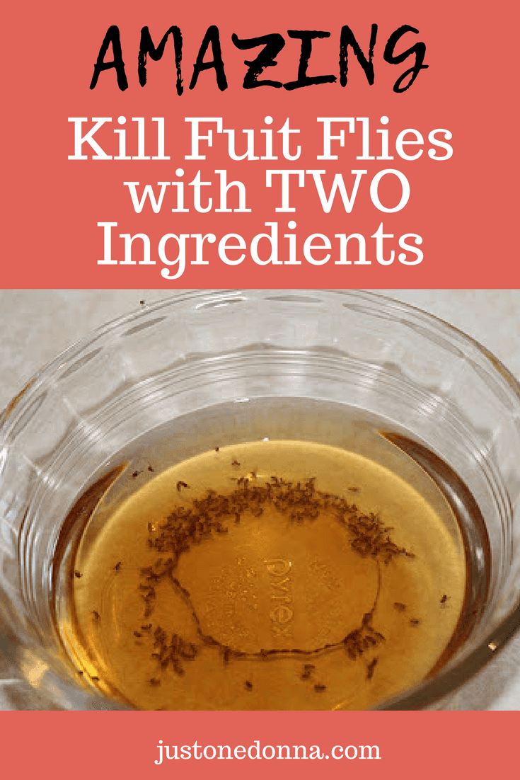 How To Trap And Get Rid Of Fruit Flies Fruit Fly Trap Diy