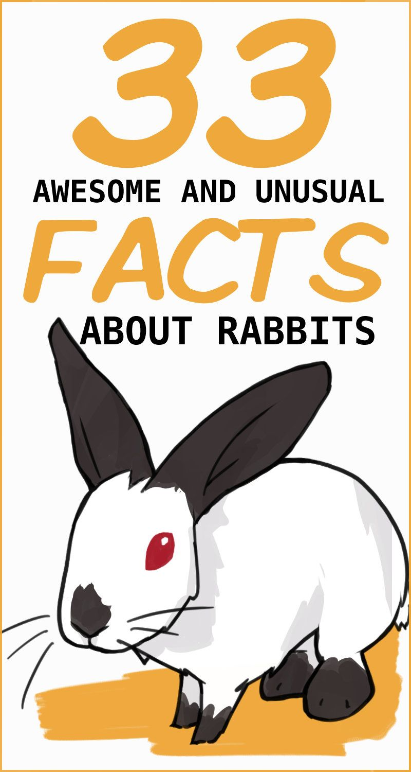 33 Awesome Rabbit Facts To Impress Your Friends In 2020 Rabbit