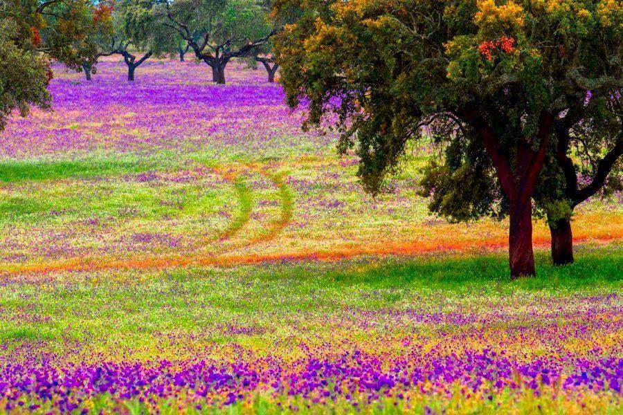The Alentejo Colours Portugal Alentejo Imagens Fantasticas