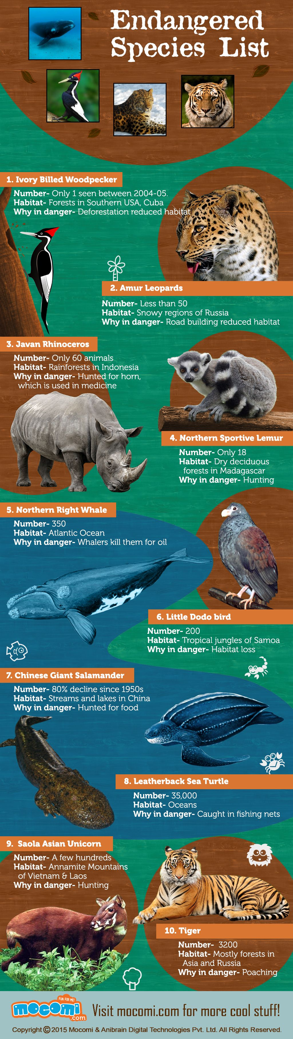 World's Top 10 Endangered Species General Knowledge
