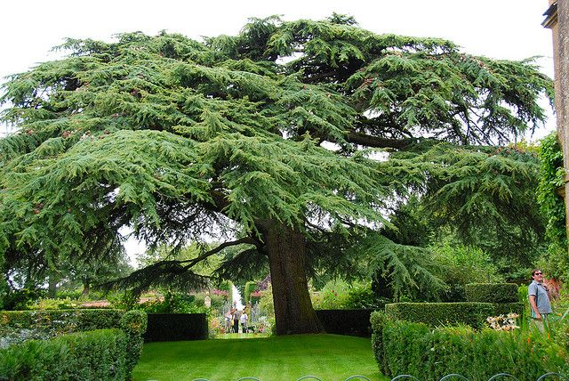 Branching Out at Hidcote Manor Garden by antonychammond, via Flickr