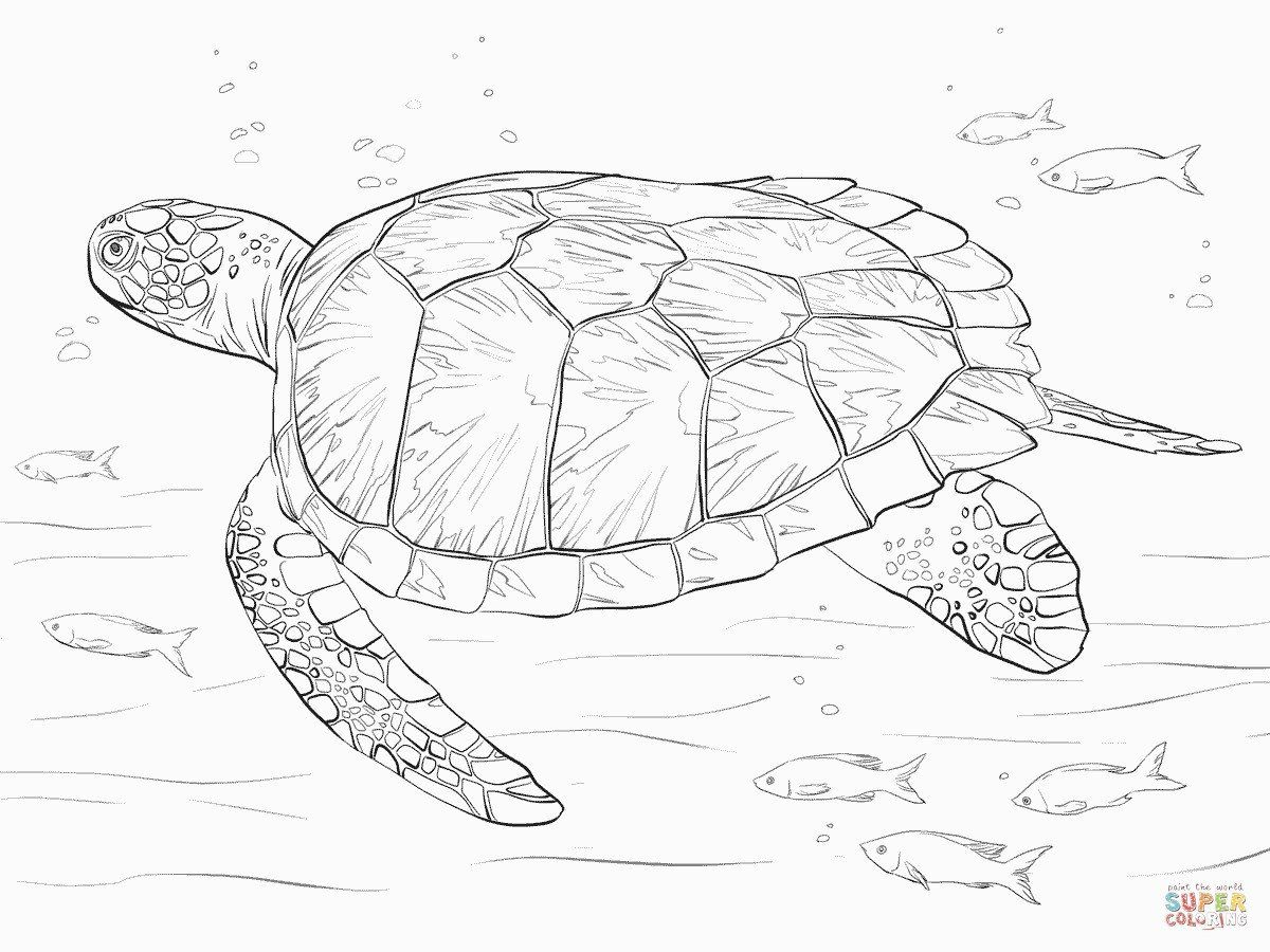 Sea Turtle Coloring Pages Elegant Green Sea Turtle Coloring Page For Sea Turtle Coloring Page Turtle Sketch Turtle Coloring Pages Sea Turtle Art