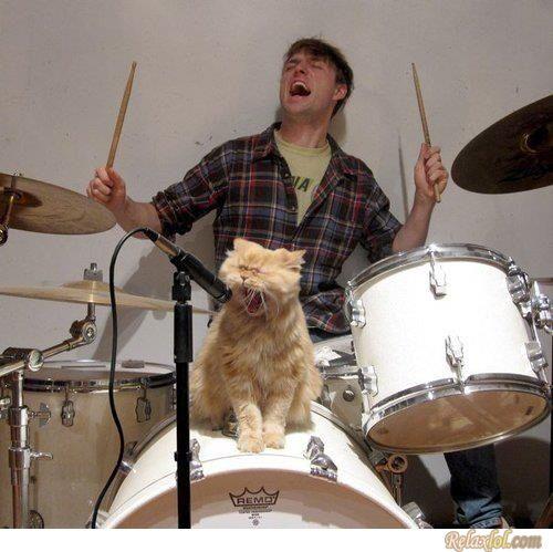 Rock cat..