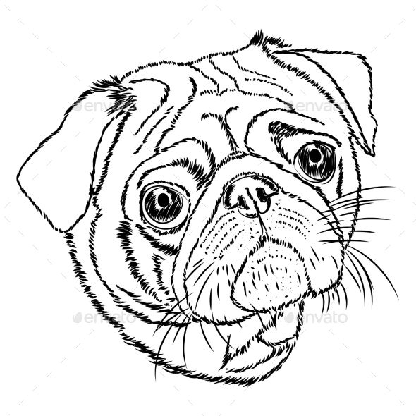 Pug Vector Linear Illustration On A White Background Risunki