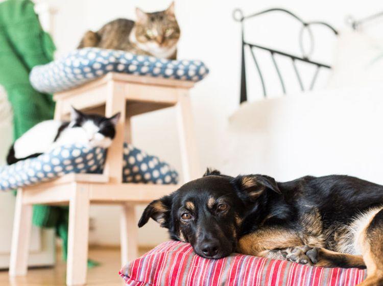 Haustiere in der Wohnung Mietrecht Faktencheck