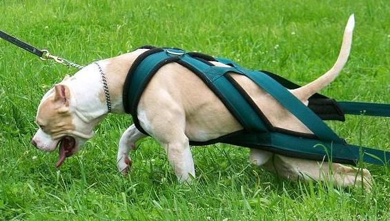 Great For Your Dogs Exercising Needs Especially For Dogs That