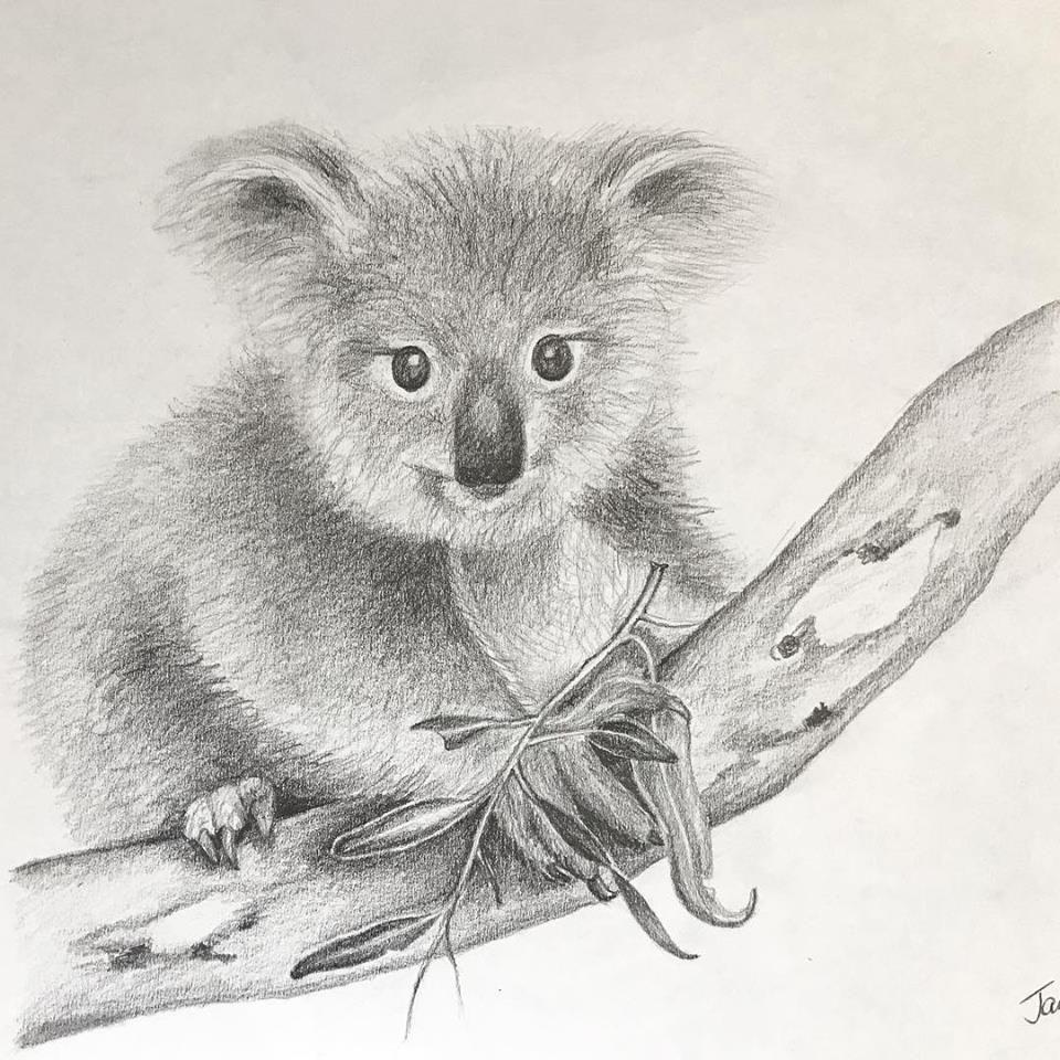 Koala Bear Cartoon Drawing at GetDrawings | Free download |Cute Baby Koala Leg Drawing