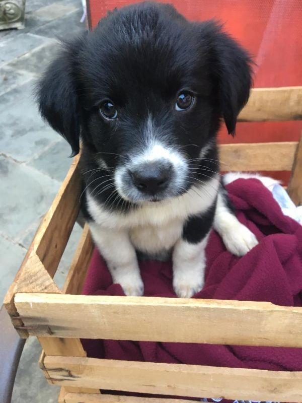 Pets For Adoption Petfinder Pet Adoption Pet Adoption