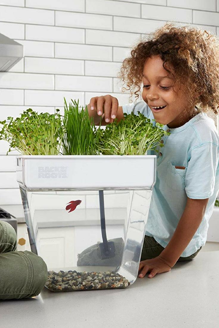 The Best Indoor Garden Kits According To Chefs And Gardeners