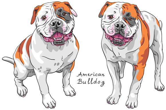 Dog American Bulldog SET by kavalenkava on @creativemarket | My ...