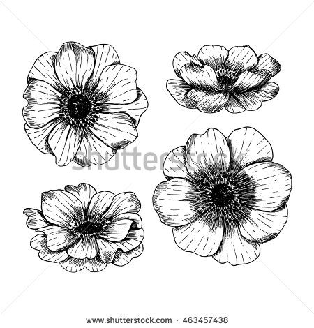 Anemone Flowers Vintage Vector Anemone Flowers Collection Engraved Style Illustration Vector Illust Pencil Drawings Of Flowers Flower Drawing Vintage Tattoo