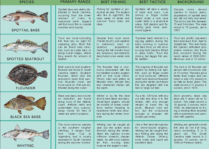 Www Gameandfishmag Com Files 2010 09 Sc 0506 01inset Jpg Fishing Tips Saltwater Fishing Gear Salt Water Fishing