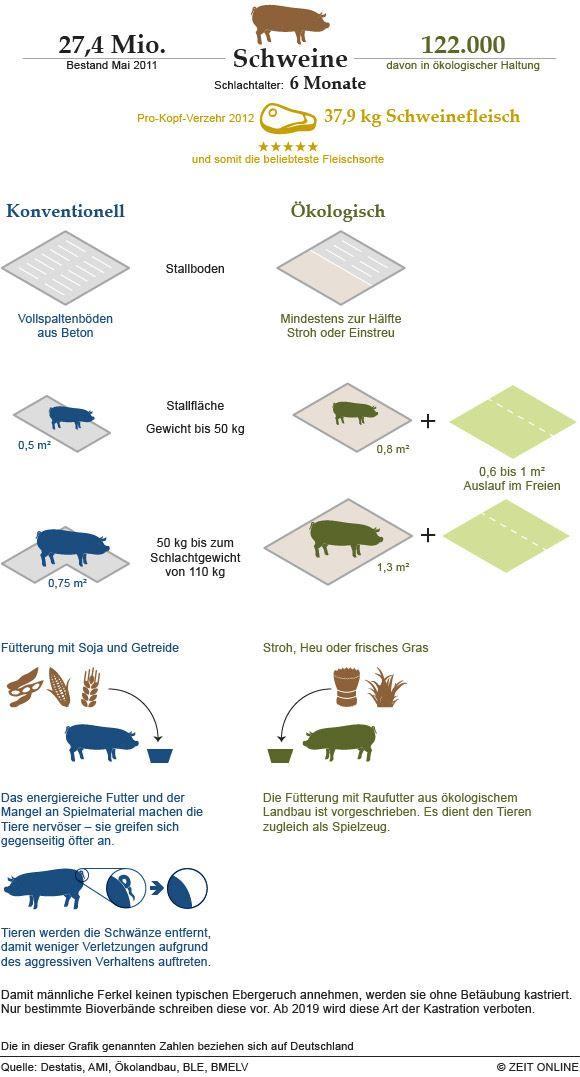 Themenwoche Vegan So Viele Tiere Verbrauchen Wir Infografik Vieh Nutztiere
