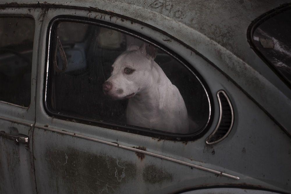 ne-pas-reutiliser-silence-of-dogs-in-cars-7_1127591.jpg (1000×667)