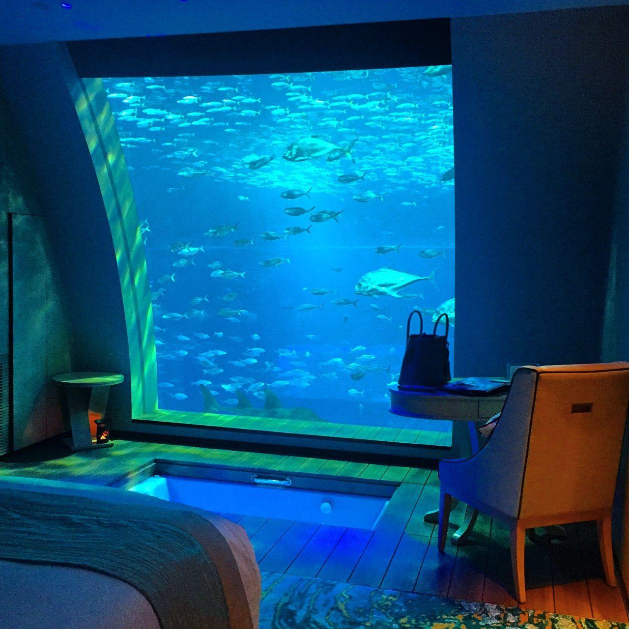 Aquariaum Lagoon Treehouse Hotel Rooms Equarius
