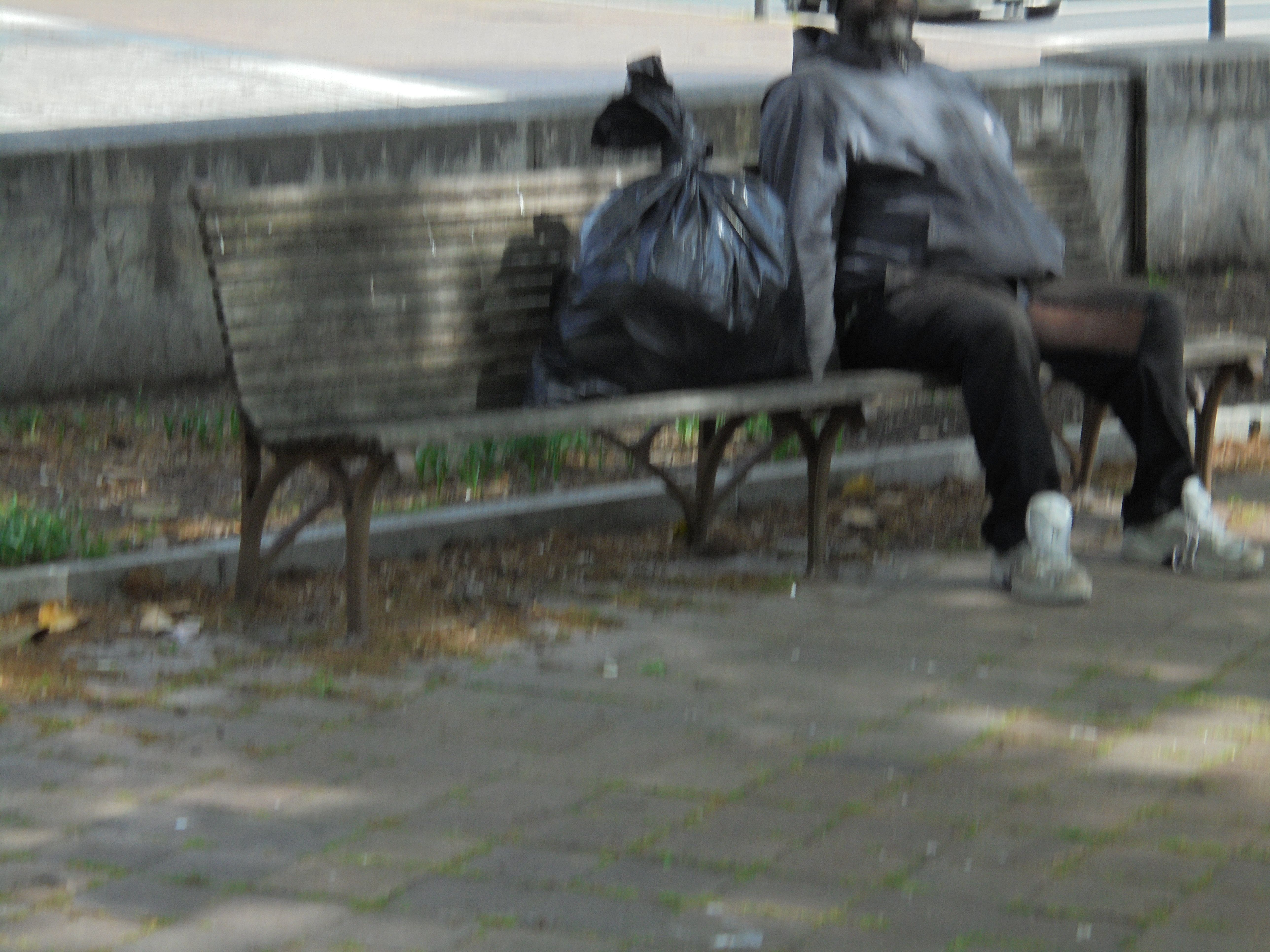 This Fellow Has Bagged This Bench In John Marshall Park In Washington Dc He Kind Of Lives Here In 2020 Washington Dc Park Life