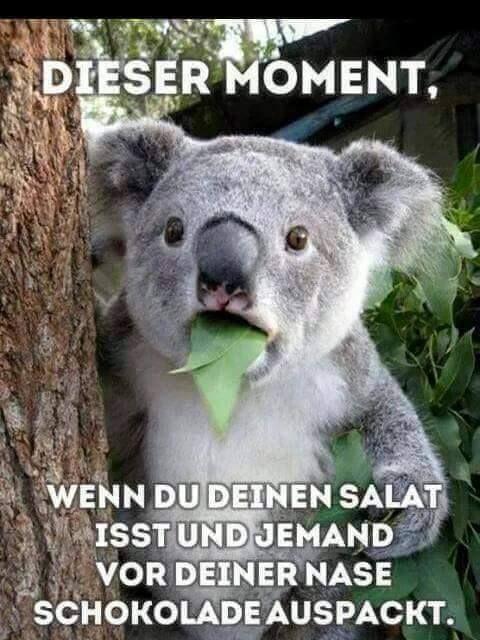 dieser moment wenn du deinen salat isst witziges pinterest humor and german humour. Black Bedroom Furniture Sets. Home Design Ideas